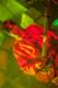 Musketeer Gripweed 2012-10-26-76-8430 thumbnail