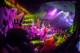Musketeer Gripweed 2012-10-26-94-8590 thumbnail