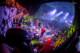 Musketeer Gripweed 2012-10-26-97-8588 thumbnail
