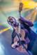 Dave Matthews Band 2013-08-24-60-5039 thumbnail