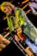 Tom Petty 2014-09-30-09-0398 thumbnail